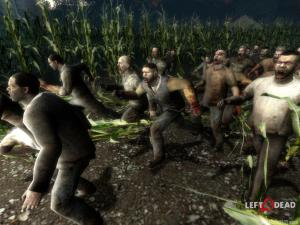cornfield infected